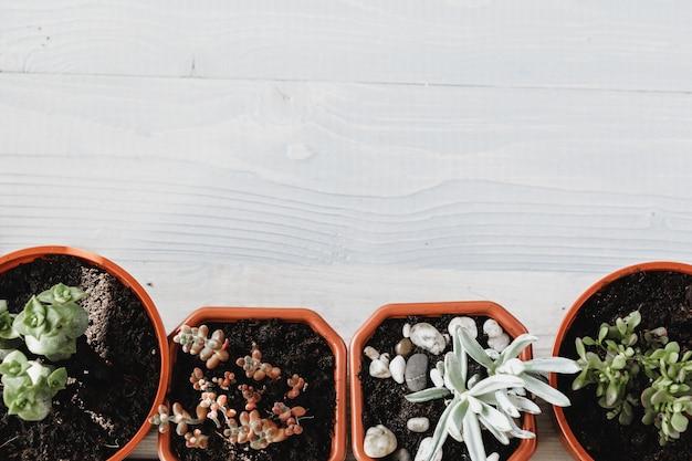 さまざまなタイプの多肉の開花ハウス植物の背景