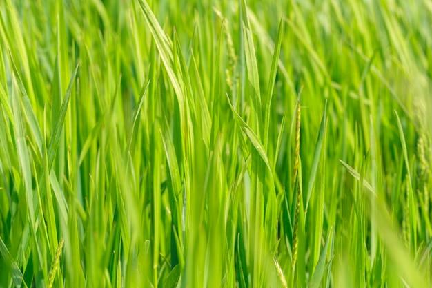 Весеннее поле травы