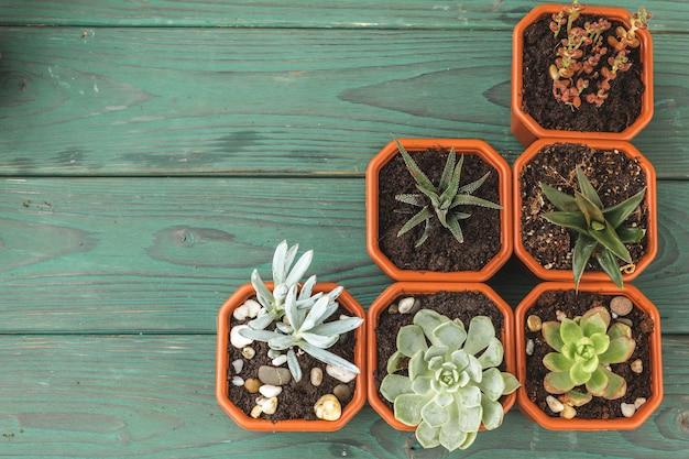 木製のテーブルの小さな鍋に複数の多肉植物
