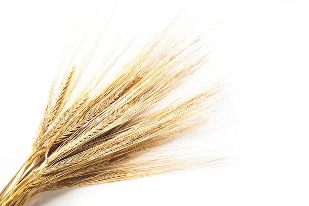 小麦の穂が白い背景で隔離