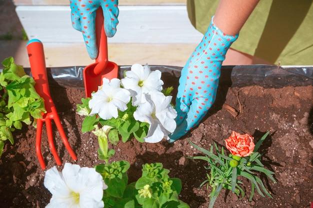 人々、ガーデニング、花の植栽、職業コンセプト-女性または庭師の手の植栽のクローズアップ