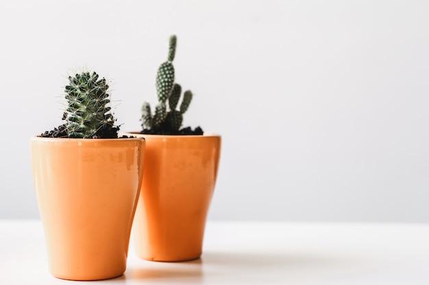 Различные кактусы и суккуленты в горшках