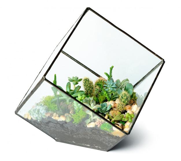 白で隔離されるガラス花瓶の多肉植物