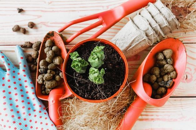 さまざまな観葉植物、園芸用手袋、ポッティング土壌、白い木製のこてのコレクション。鉢植えの家の植物の背景。