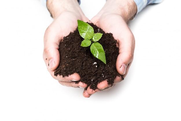 Мужские руки, держа почву и растения, крупным планом