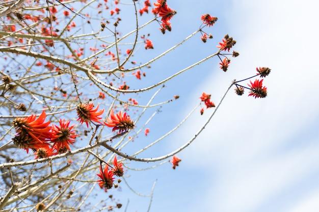 Большой конец-вверх рамбутана вися на дереве