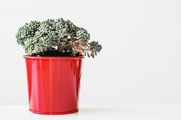 Суккуленты. горшечные комнатные растения, домашний интерьер