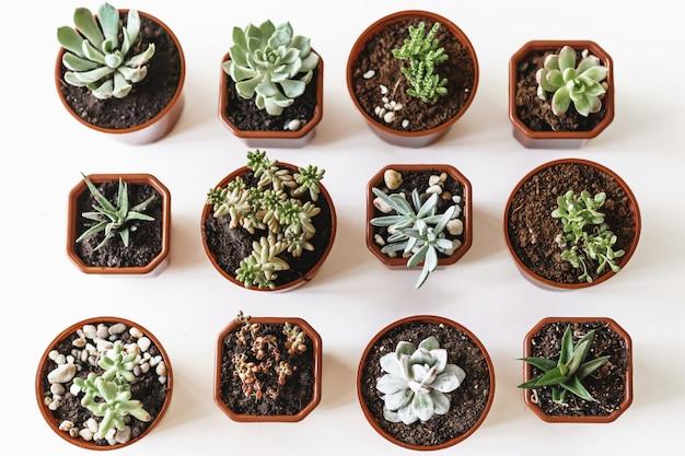 Красивые сочные растения в горшках на белом столе