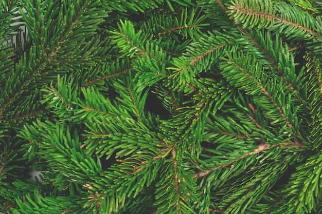 松の木の枝の山を背景としてクローズアップ