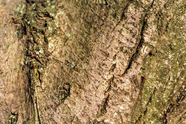 背景の木の樹皮のテクスチャー