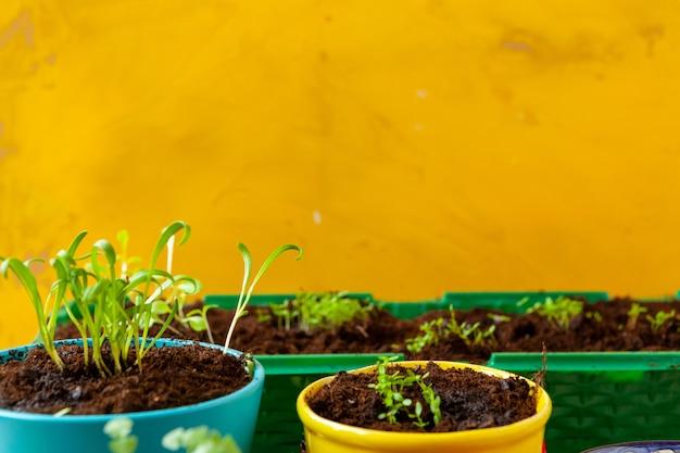 庭で働いて、植木鉢をクローズアップ