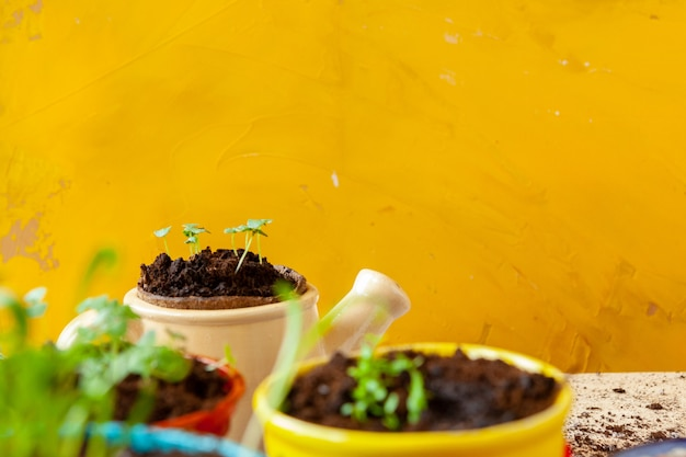 Работа в саду, посадка горшков крупным планом