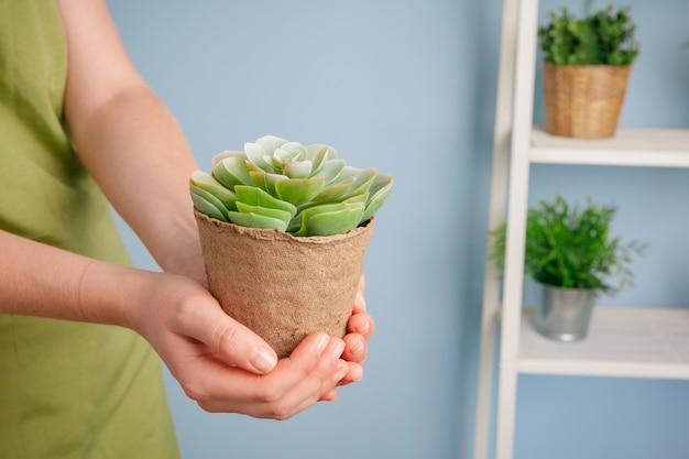 Съемка крупного плана женщины держа зеленое растение в ладони ее руки. закрыть