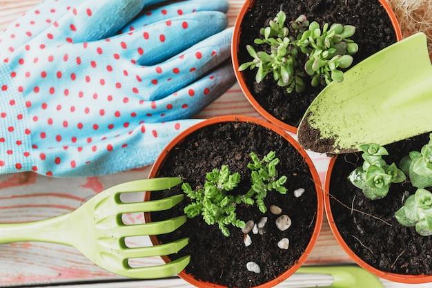 さまざまな観葉植物、園芸用手袋、鉢植え用土、こてのコレクション。観葉植物