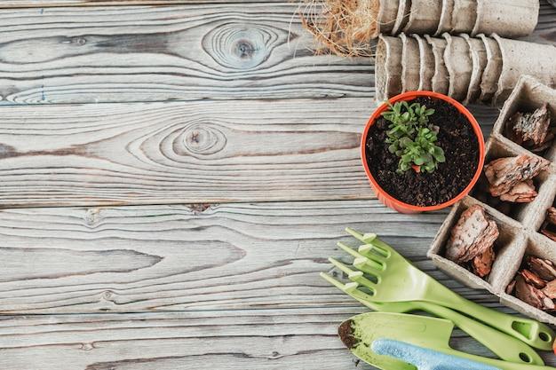 植物を移植する春の準備。ポット、シャベル、多肉植物