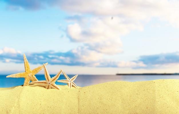 Морские раковины с песком как фон. летний пляж