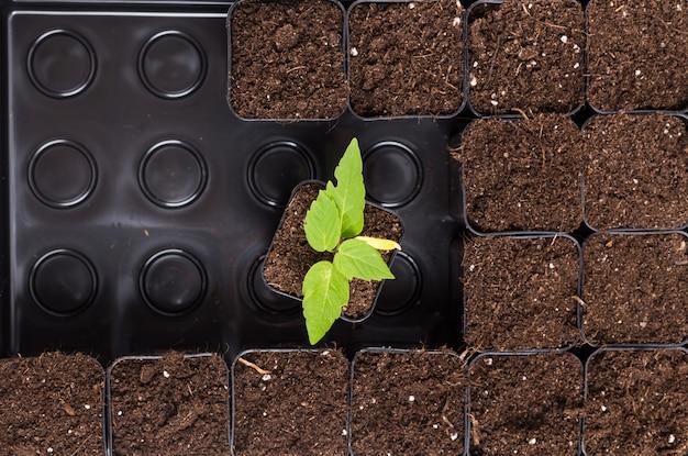 茶色の土壌で発芽する植物