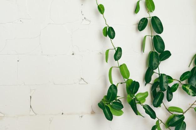 Закройте вверх зеленого комнатного растения на белой стене, внутреннего художественного оформления