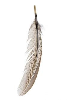 Птичье перо на белом фоне