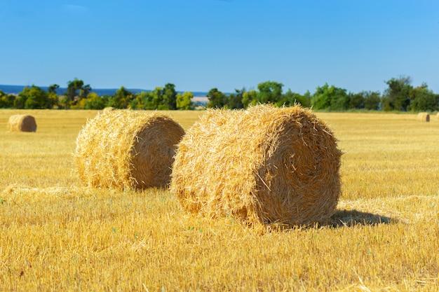 Золотые тюки сена в сельской местности