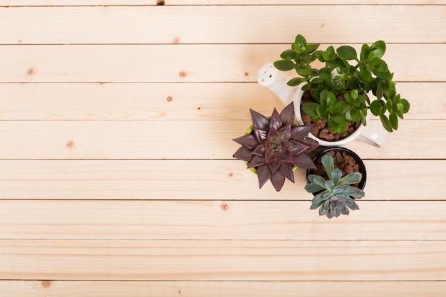 Суккуленты, комнатные растения в горшках