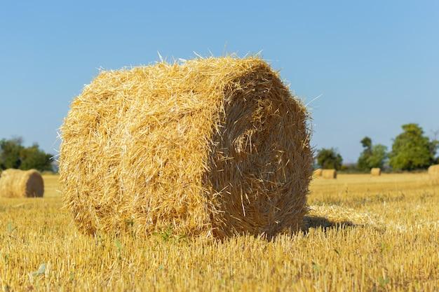 田舎で黄金の干し草の俵