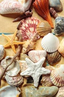 海の貝殻を持つ夏の時間の概念