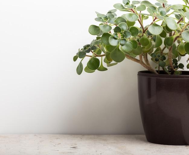 黒い鍋に観葉植物