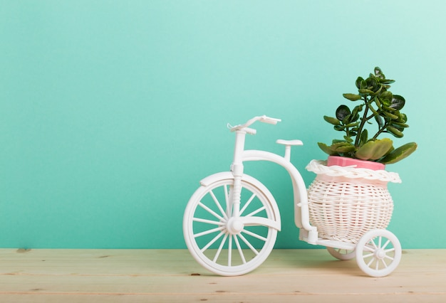 Домашнее растение в велосипедном горшке