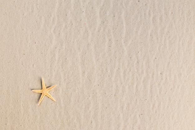 浜辺のヒトデ