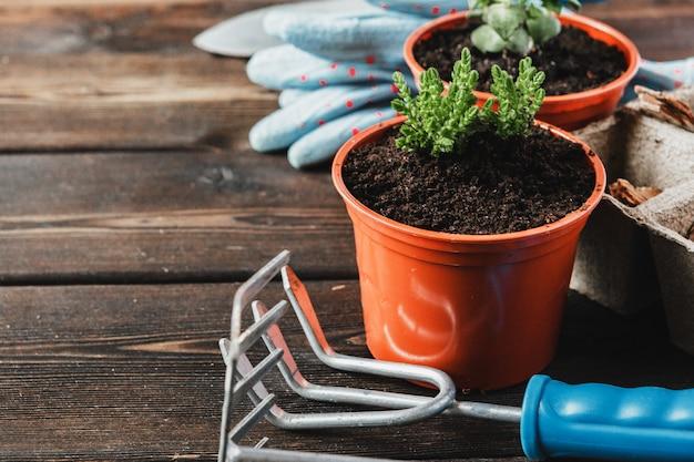さまざまな観葉植物、園芸用手袋、鉢植えの土、白い木のこてのコレクション。観葉植物の鉢植え。