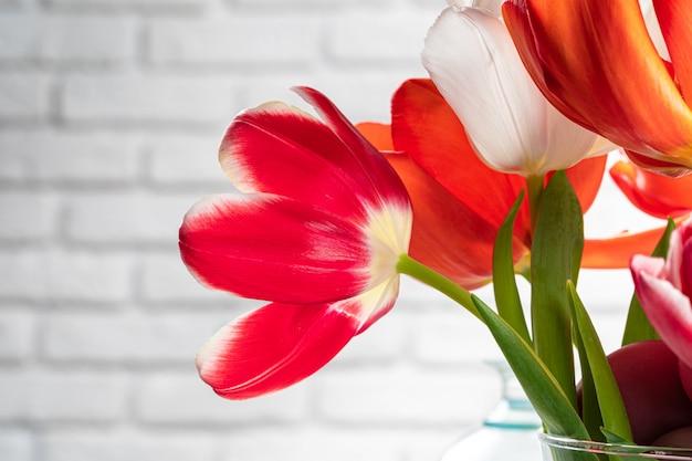 白いレンガの壁に新鮮な春のチューリップの芽をクローズアップ