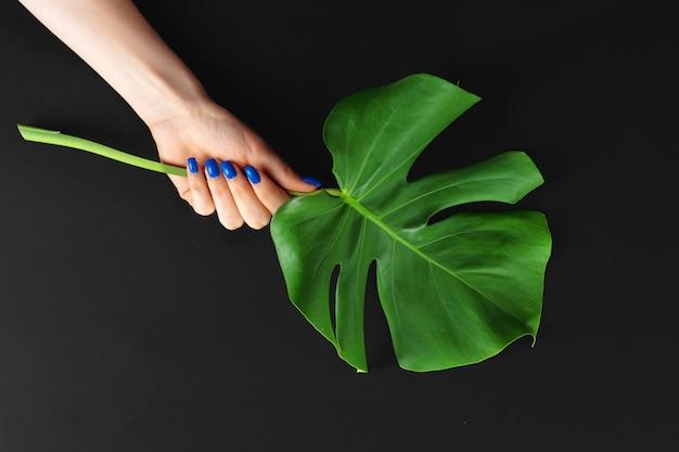 クラシックな青い色の女性の手は、モンステラの葉にマニキュアを爪します。クリエイティブな写真