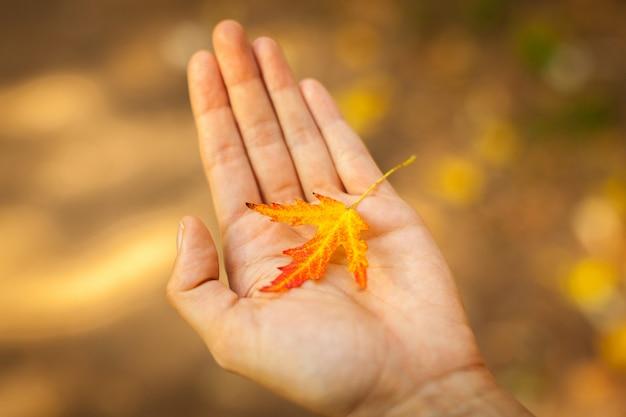 赤と黄色の秋の葉を持っている手