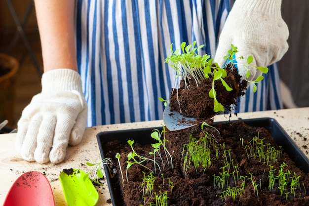 コンテナーに土や土を入れたポットに芽を植える女性の手