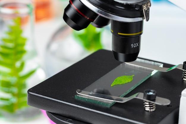 Закройте вверх лист завода на предметном стекле в микроскопе. концепция биотехнологии