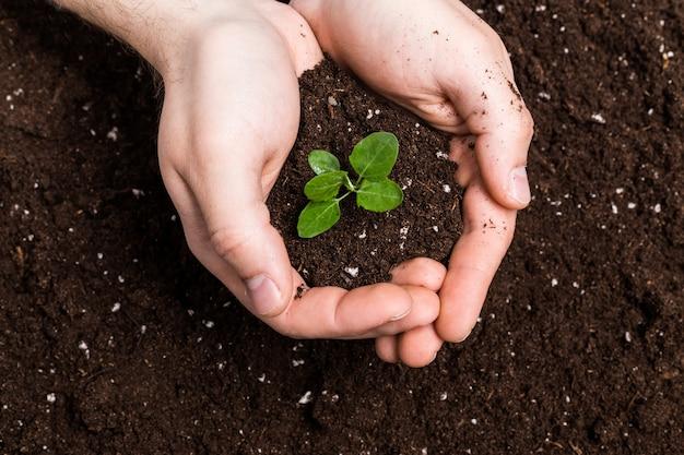 手を土の表面に苗木