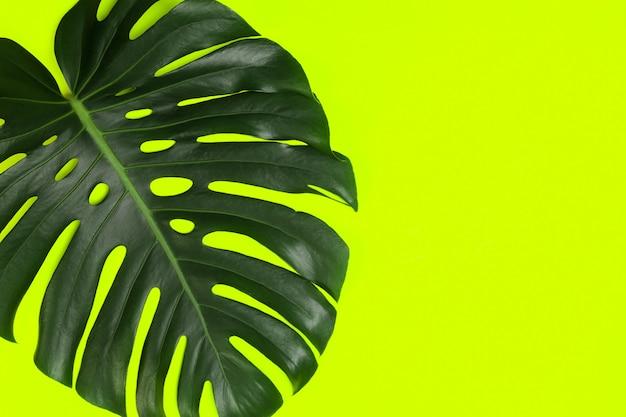 モンステラの葉とファッションの背景