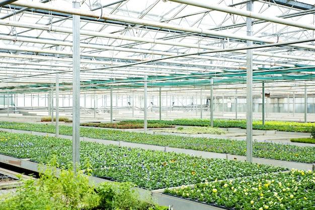 温室の花と植物