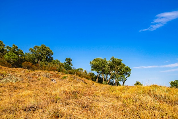 南フランスの田舎の木々を見る