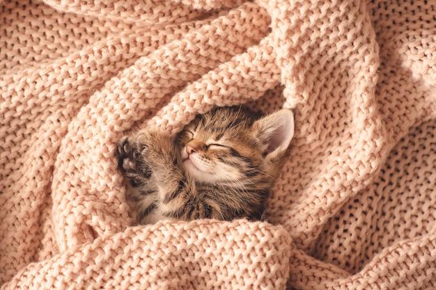 かわいい小さな赤い子猫が毛皮の白い毛布で眠る