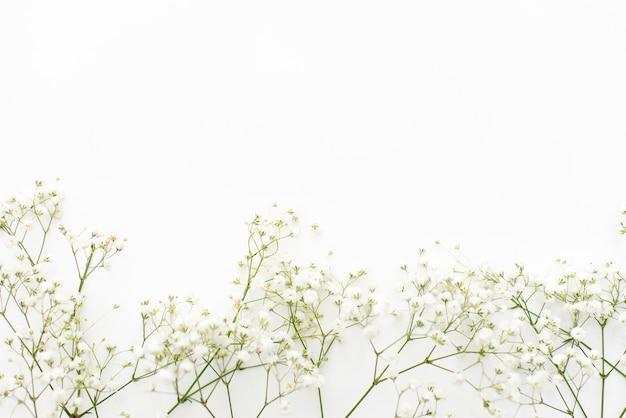 白い背景の上のジプソフィラの花。カードの繊細な背景