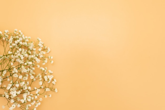 Цветочный красивый пастельный розовый фон. белые маленькие цветы. цветы гипсофила. плоская планировка, вид сверху, копия пространства