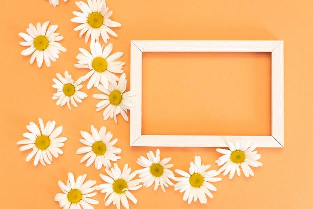 テキスト、花のハーブのポストカードのためのスペースを持つカモミールフレーム