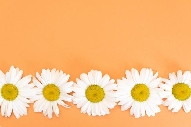 小さなデイジーの花と花柄の葉と花びら