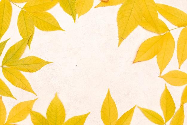 白い背景に分離された多くの秋のカエデの葉