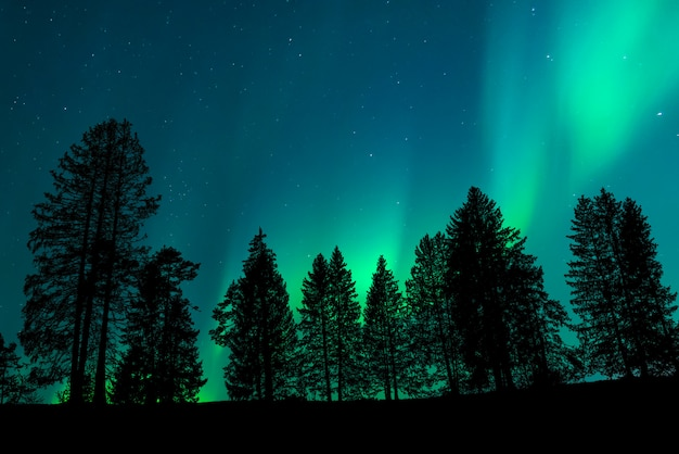 Вид на лес с ночным небом
