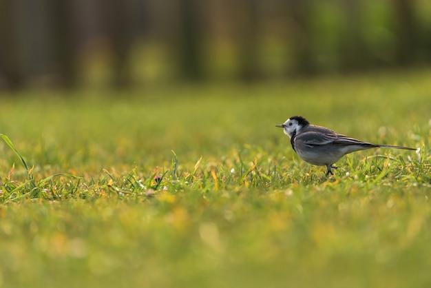 草の上の小さな鳥