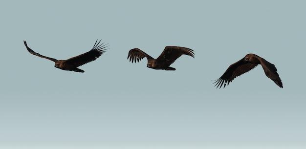 Дикий гриф летит над небом