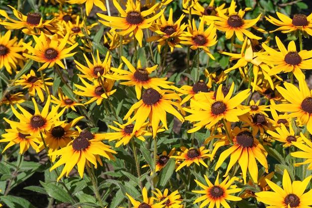 夏の黄色い花をクローズアップ